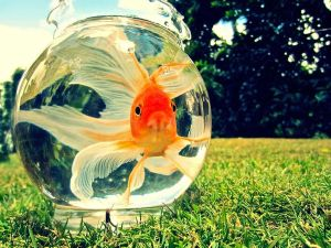 kids-myshot-goldfish-bowl_55868_600x450
